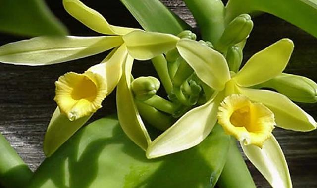 floracion2